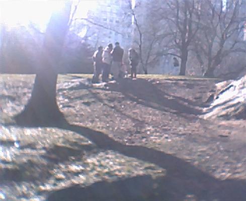 Sunshine andtrees